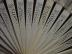 Click to view larger image of Victorian Ivory Hand Painted Fan (Image6)