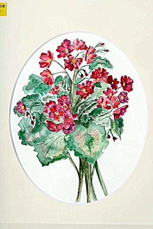 Bouquet Of Geraniums