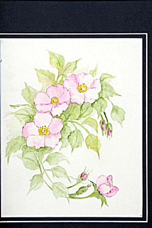 Wild Rose Spray