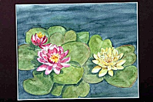 Waterlilies (Image1)