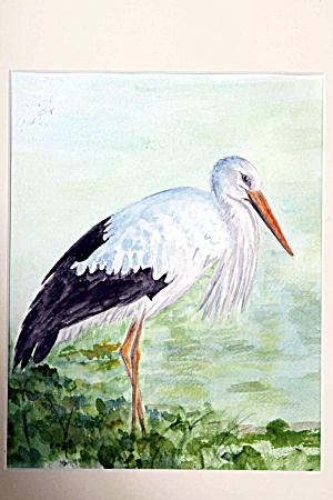 Stork in marsh (Image1)