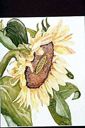 Sunflower (Image1)