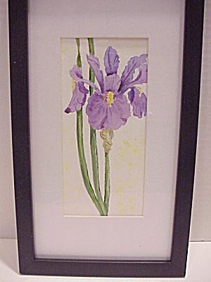 Iris Flower (Image1)
