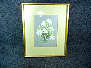 Print By Olive M. Davys Matted And Framed Musk Mallows