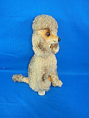 poodle by KAMAR (Image1)