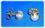 Click to view larger image of Earrings 14K Gold 6.5mm Pearl Claw Set  Studs  (Image1)