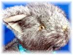 Click to view larger image of GUND gray Kitten 5 inches tall. (Image2)