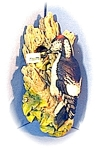 Click here to enlarge image and see more about item 0622200311: 1968 Bosson England Woodpecker & Babies