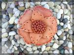 Click to view larger image of Leather Flower Brooch handmade for Lapel or Hat ....... (Image7)