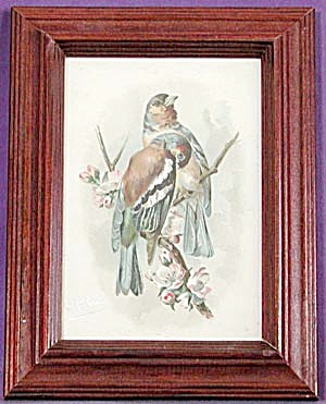 Vintage Framed Bird Print