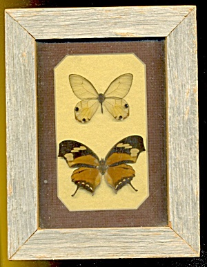 Vintage Butterfly Couple