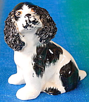 Black And White Cocker Spaniel Dog Spaghetti Trim Ears