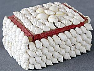 Vintage Souvenir Shell Box (Image1)