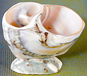 Victorian Seashell Holder (Image1)