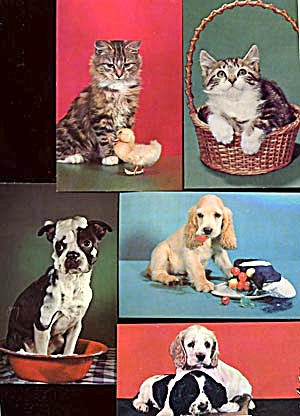 Vintage Postcards: Kittens & Puppies Set Of 5