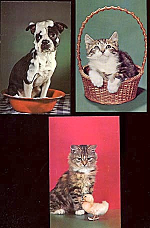 Vintage Postcards: Kittens & Puppies Set of 3 (Image1)