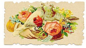 Vintage Calling Card Hand Around the Nest of 2 Pigeons (Image1)