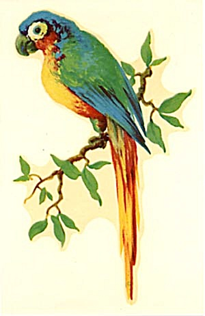 Vintage Meyercord Decal Blue & Green Parrot (Image1)