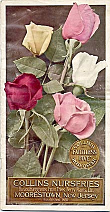 Vintage Collins Nurseries Roses Fruit Trees Evergreens
