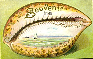 Large Shell Souvenir Postcard