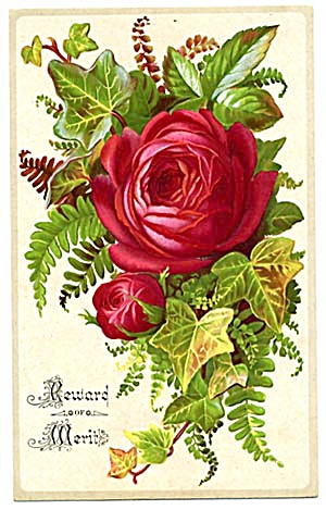 Victorian Reward of Merit Red Rose (Image1)
