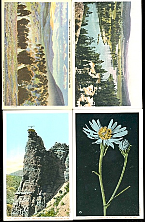 Vintage Yellowstone National Park Postcards