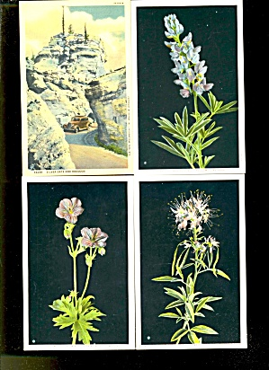 Vintage Yellowstone National Park Flower Postcards