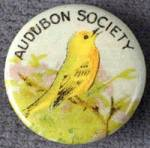 Click here to enlarge image and see more about item ASP117: Vintage Celluloid Audubon Pinback