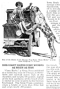 1926 Huge Great Dane At Chicago Dog Show Mag. Article