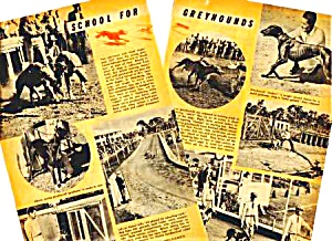 1945 SCHOOL FOR RACING GREYHOUND DOGS Mag. Article (Image1)