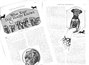 1926 What Your Dogs Really Know Mag. Article