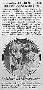 1924 Hero Collie Dog Mag. Article L@@k
