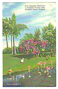 1950s PINK FLAMINGOS Sarasota Florida Linen Postcard B (Image1)