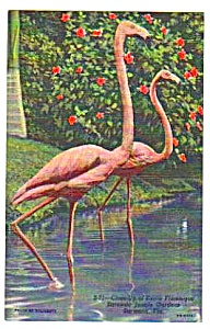 Lot of 1950s PINK FLAMINGOS Sarasota Florida Postcards (Image1)
