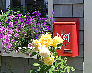 U.s. Post And Flowers Photograph 1 - Limited Edition
