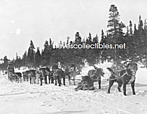 c.1920 Erick Johnson U.S. MAIL TEAM Sled Dogs Photo (Image1)