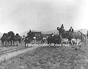 C.1910 Campbells Circus At Plains, Montana - Photo