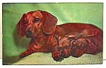 Click here to enlarge image and see more about item DG1118A1: Vintage Faukner DACHSHUND & Pups Postcard