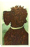 Click here to enlarge image and see more about item DG1130A1: Vintage Mainzer POODLE? DOG Postcard