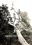 Vintage Photo: Four HALF-NAKED Men in a Tree - Gay Int.