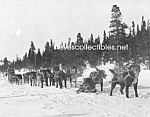 Click here to enlarge image and see more about item PR0318A5-2007: c.1920 Erick Johnson U.S. MAIL TEAM Sled Dogs Photo