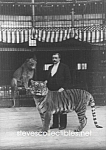 c.1893 HAGENBECKS Trained Animals Tigers CIRCUS - Photo