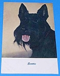 Vintage SCOTTIE SCOTTY DOG Postcard
