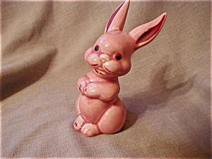 Shawnee Bunny (Image1)