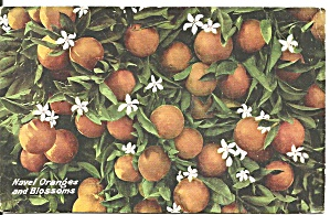 Navel Oranges and Blossoms Postcard p36643 (Image1)