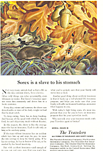 Travelers Insurance Sorex  Ad (Image1)