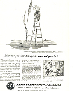 RCA Ear of Grain Ad (Image1)