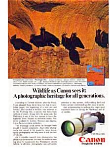 Cannon F-1 Wildlife Waldrapp Ibis Ad (Image1)