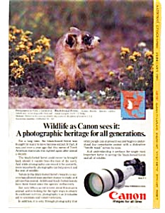 Canon Camera  Ad With Ferret (Image1)