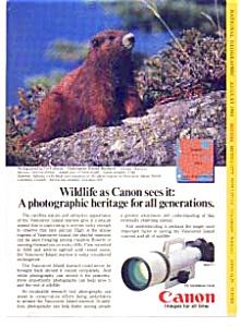 Canon F-1 Wildlife Ad Vancouver Island Marmot (Image1)